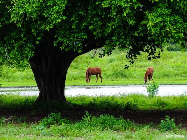 Fazenda São João, no Pantanal