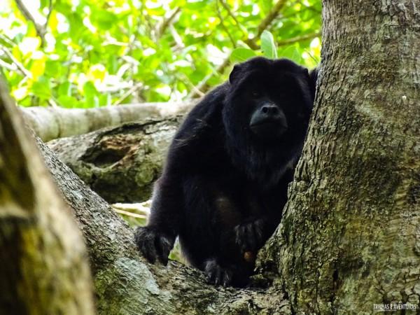 Viagem ao Pantanal-1