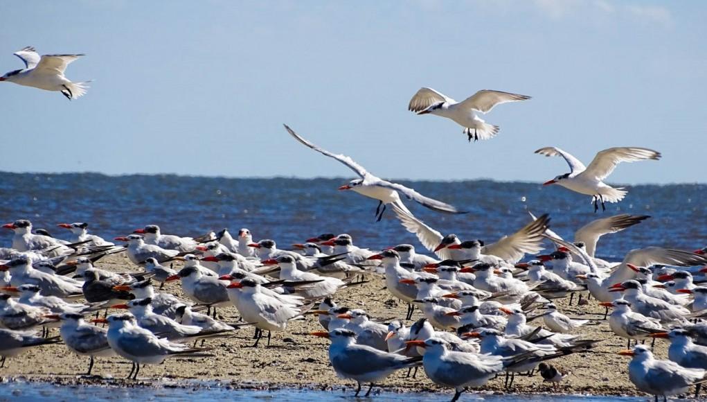Santuário de aves marinhas em Golden Isles