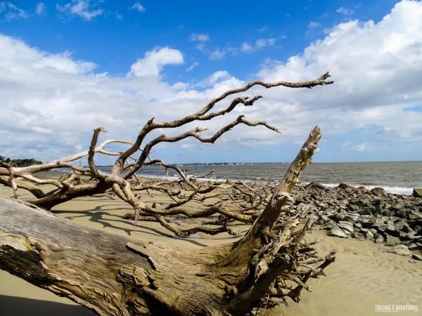 Driftwood Beach é uma das praias mais bonitas dos EUA