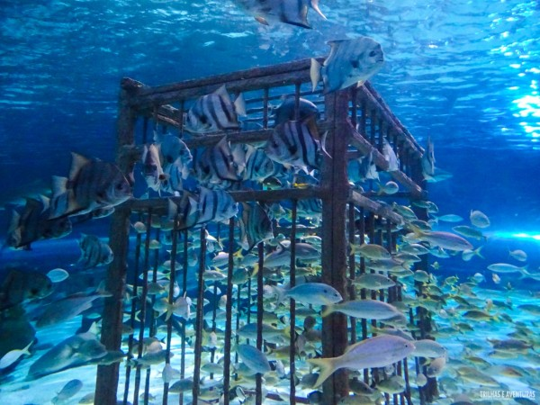 Ripleys Aquarium em Myrtle Beach