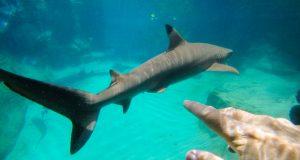 """Fazendo novos """"amigos"""" no Discovery Cove Orlando"""