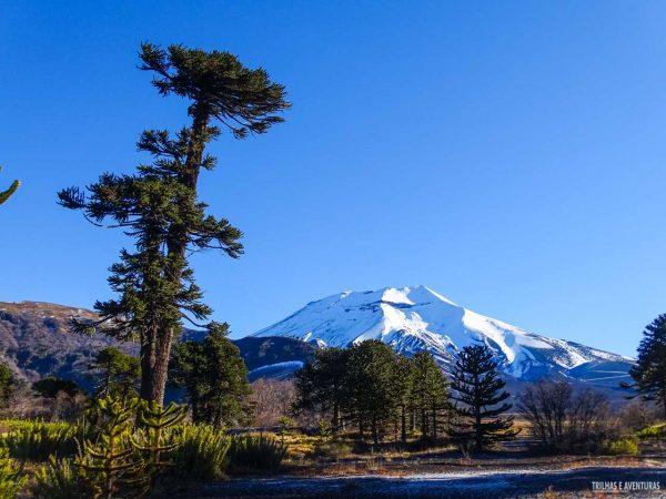 A Araucária milenar e o Vulcão Lonquimay em Corralco
