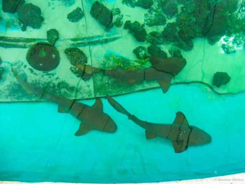 É possível alimentar os tubarões do tanque no Sandoway Discovery Center
