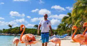 Caminhando com os flamingos na Renaissance Private Island em Aruba