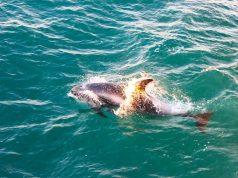 A Elding oferece exclusivos passeios de barco para a Observação de Baleias em Reykjavík