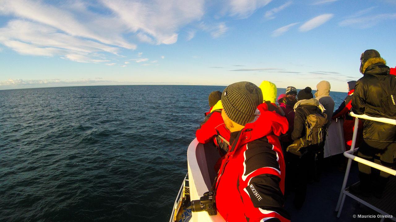 Em busca das baleias na baía de Reykjavík