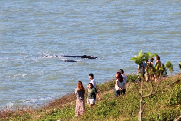 Observação de Baleias em SC - Foto: Julio Vicente