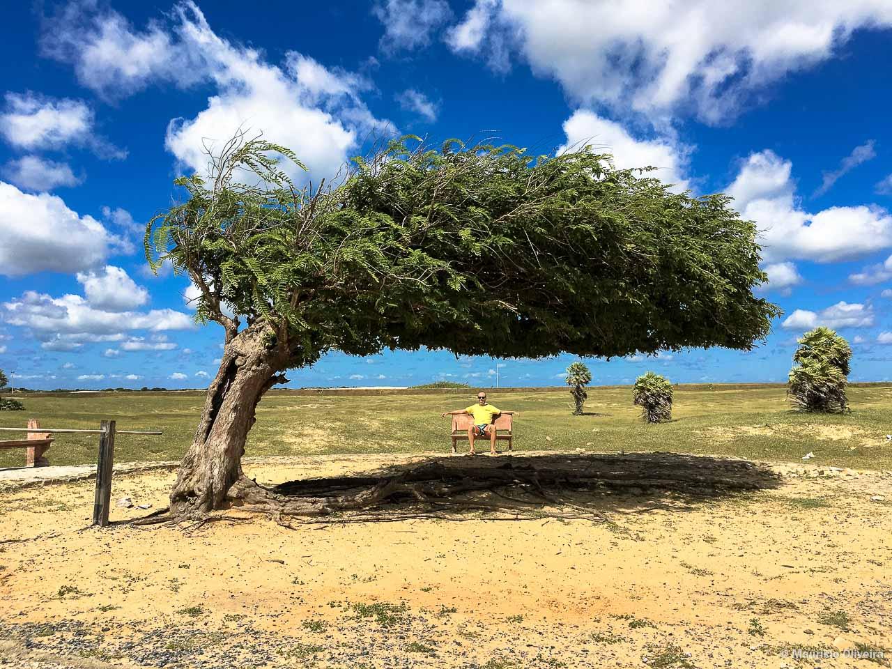Árvore Penteada, no Piauí