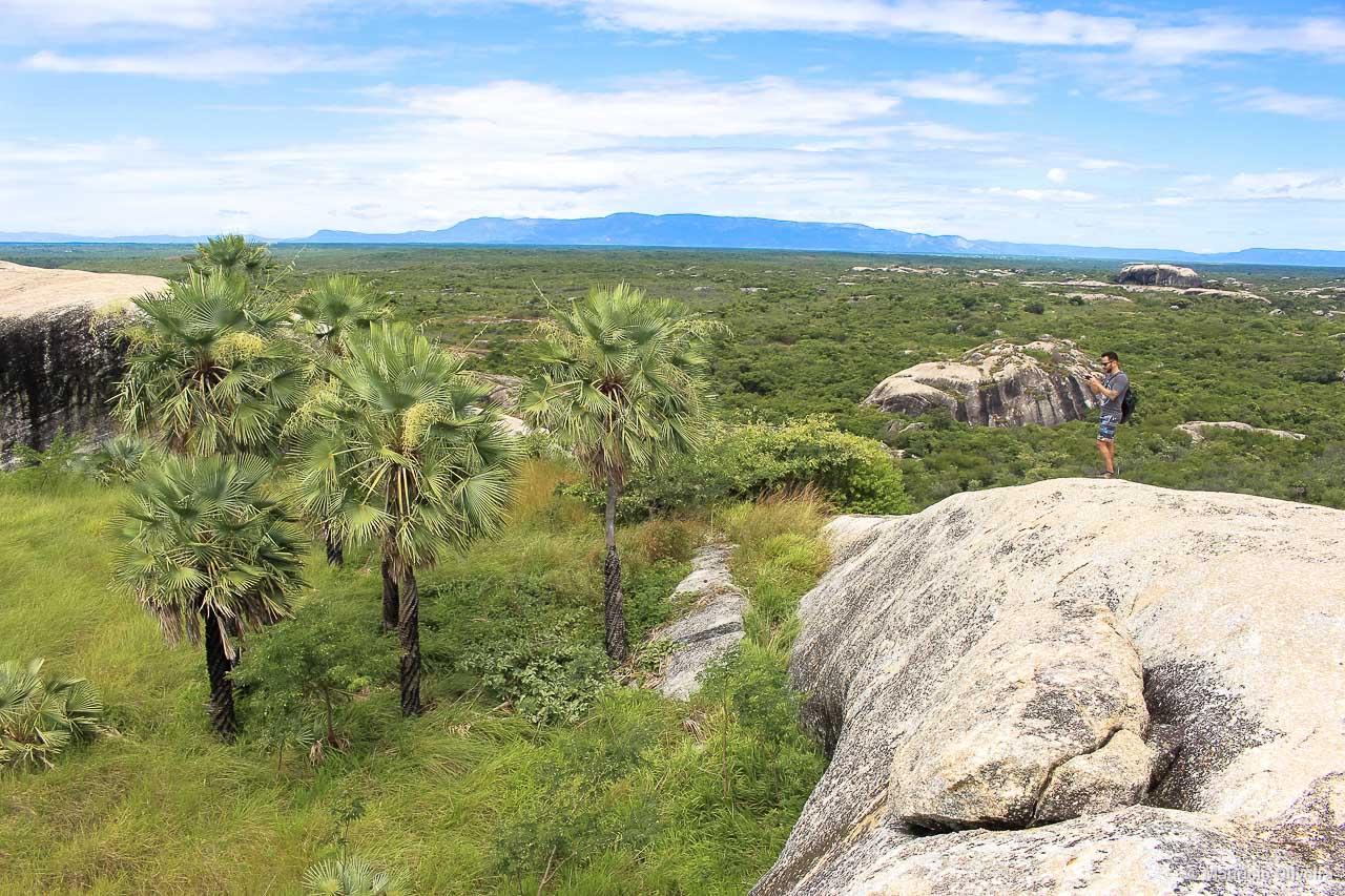 Um oásis repleto de carnaúbas no topo das pedras de Chaval - CE