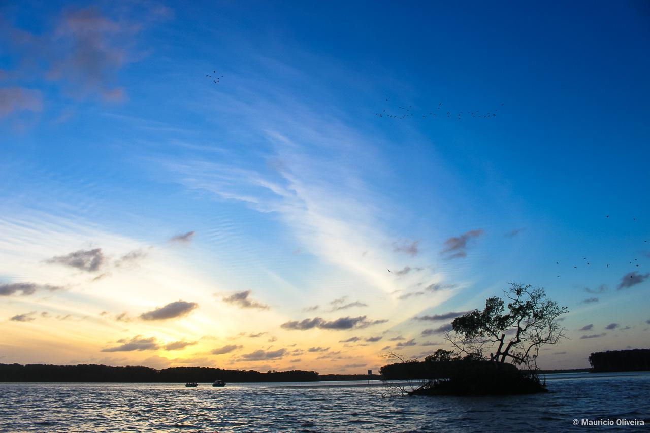 Revoada dos guarás durante o pôr do sol no Delta do Parnaíba - PI