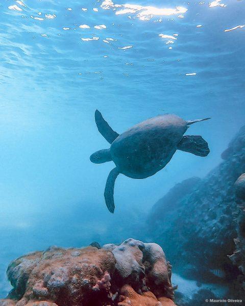 Tartaruga na Lagoa Azul, em Ilha Grande - RJ