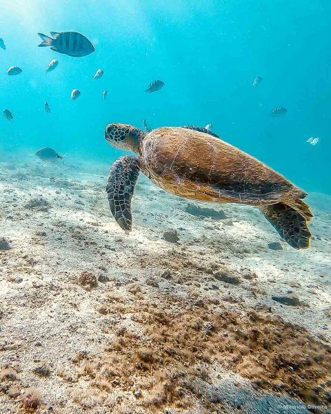 Tartaruga na Lagoa Verde, em Ilha Grande - RJ