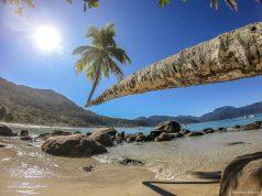 Coqueiro da Praia do Aventureiro, em Ilha Grande - RJ