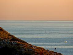 Observação de baleias em Arraial do Cabo